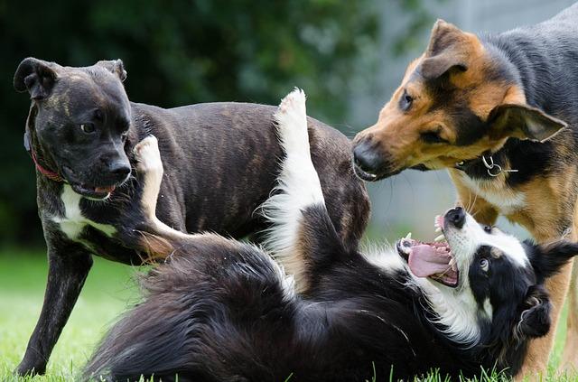Hunder som leker