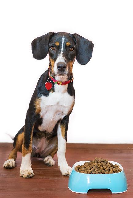 Hund som venter foran matskålen