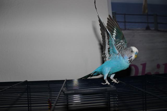 Undulat som strekker vingene