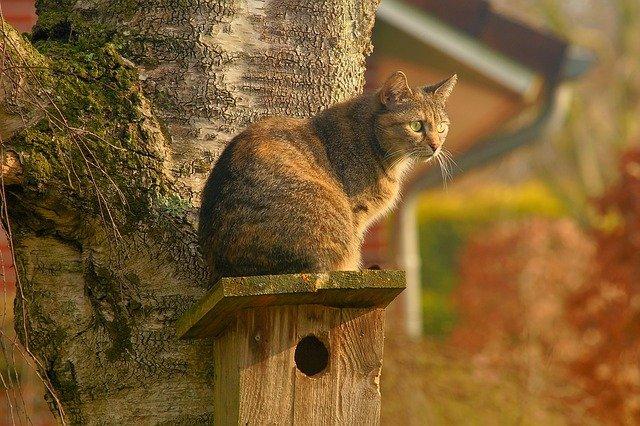 En katt som sitter på fuglekassa