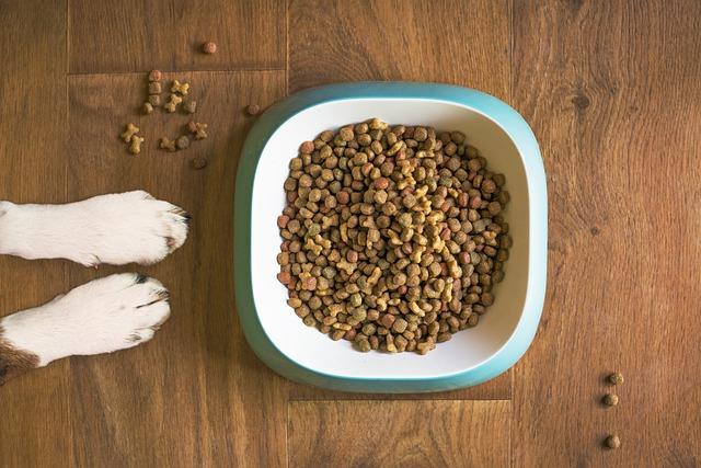 Matskål til hund